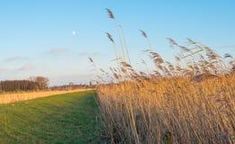 在日落期间的典型的荷兰开拓地风景 库存照片