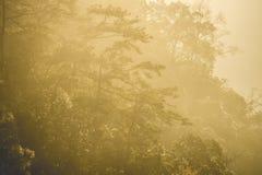 在日落期间的山谷 库存照片