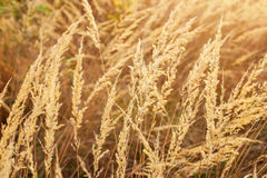 在日落期间的干草在草甸 库存图片