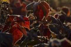在日落期间的秋叶 免版税库存照片