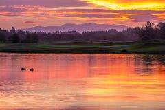 在日落期间的鸭子 免版税库存照片