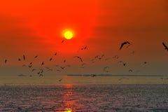 在日落期间,海鸥群飞行 免版税图库摄影