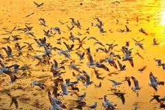 在日落期间,海鸥群飞行 库存图片