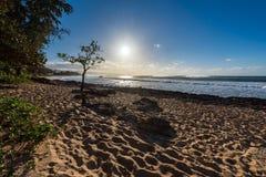 在日落海滩的伞形树在奥阿胡岛,夏威夷北部岸  免版税库存图片