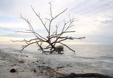 在日落海的光秃的树 免版税库存图片