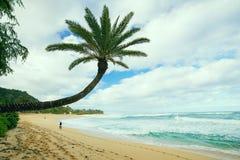 在日落海滩, O'ahu, Hawai'i的风景棕榈 免版税库存照片