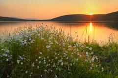 在日落湖的春黄菊 免版税图库摄影