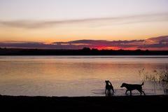 在日落湖的狗剪影 免版税库存图片