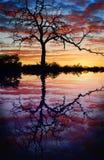 在日落湖的结构树 免版税库存图片