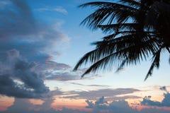 在日落热带海滩的棕榈树剪影 图库摄影