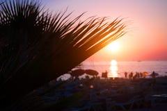 在日落热带beach.jpg的棕榈树剪影 库存照片
