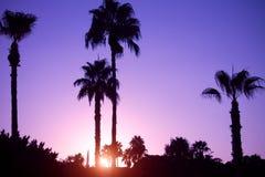 在日落热带beach.jpg的棕榈树剪影 免版税图库摄影