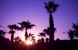 在日落热带beach.jpg的棕榈树剪影 库存图片