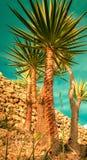 在日落热带beach.jpg的棕榈树剪影 免版税库存照片