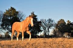 在日落画象的马 免版税库存图片