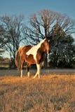 在日落画象的马 免版税库存照片