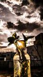 在日落的一个叶子罐 免版税库存图片