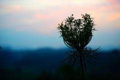 在日落的一个特别花剪影 库存照片