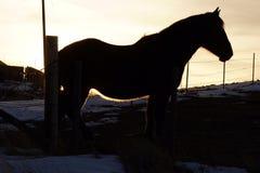 在日落的一匹马 免版税库存图片