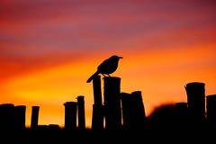 在日落的一只鸟 库存图片
