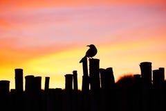 在日落的一只鸟 免版税库存照片