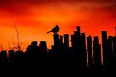 在日落的一只鸟 图库摄影