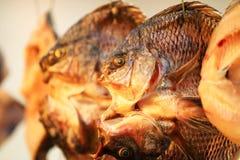 在日落的一条金黄干鱼 免版税库存图片