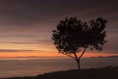 在日落的一棵偏僻的树没有太阳 免版税库存照片