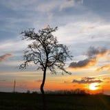 在日落的一棵偏僻的树 免版税库存照片