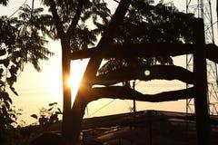 在日落的一棵好和美丽的树 免版税库存图片