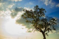 在日落的一棵树 免版税库存图片