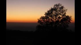 在日落的一棵树 免版税库存照片