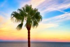在日落的一棵棕榈树 库存照片