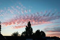 在日落的三文鱼红色色的高积云 树现出轮廓反对平衡的天空 库存照片