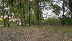 在日落的丛林在Lomellina乡下  影视素材