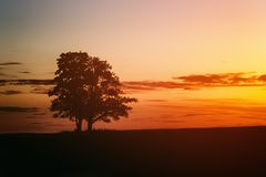 在日落的两个橡树剪影在领域 库存照片