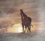 在日落的两头长颈鹿 库存图片