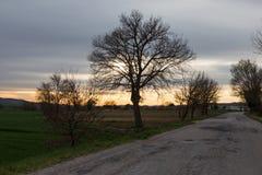 在日落的乡下公路与在左边的一个树剪影 库存照片