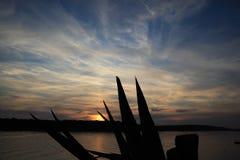 在日落的仙人掌 免版税库存照片