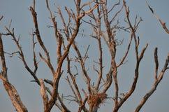 在日落的停止的结构树 免版税库存照片