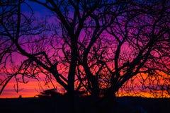 在日落的光秃的树剪影,爱尔兰 图库摄影