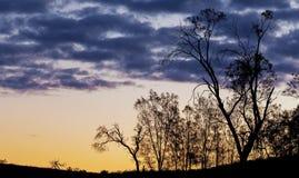 在日落的光秃的树剪影 库存图片