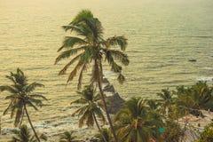 在日落的光芒的棕榈树在背景中阿拉伯海 库存照片