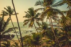 在日落的光芒的棕榈树在背景海滩的和 库存照片