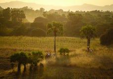 在日落的农村路在Bagan,缅甸 免版税库存照片