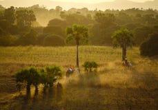 在日落的农村路在Bagan,缅甸 图库摄影