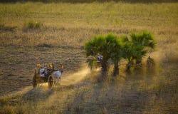 在日落的农村路在Bagan,缅甸 库存照片
