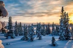 在日落的冬天北部foserst 免版税库存图片