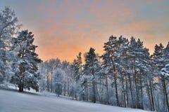 在日落的冬天木头。 图库摄影