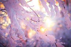 在日落的冬天横向。 保加利亚 图库摄影